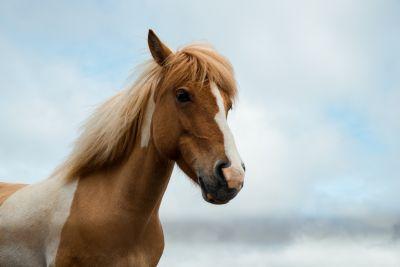 Hur mycket kostar det att ha en häst?